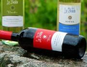 Agencia diseño web gráfica corporativa vinos etiquetas ibiza barcelona lanzarote