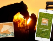 very-horse-diseno-aplicaciones-movil-portada-pixelimperium-ibiza